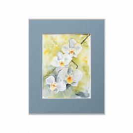 Storczyki - kwiaty akwarela